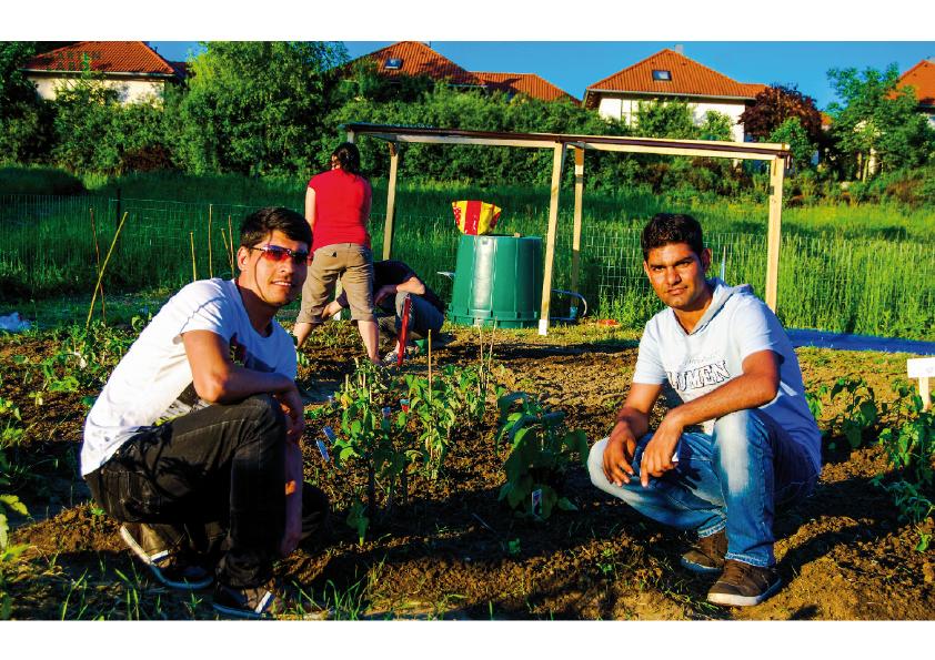 Garten Labor. Asylwerber aus Afghanistan und Syrien.